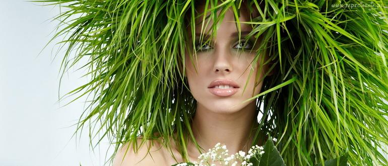 травы от выпадения волос на голове